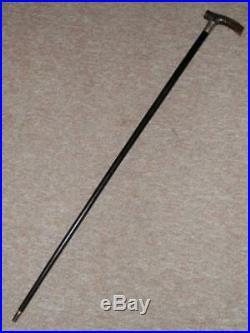 Antique Walking Stick Bovine Horn Handle With H/m Silver Collar B'ham 1906