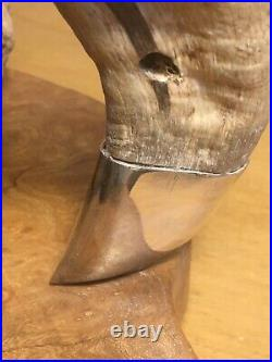 Mounted Sheep Horn With Solid Silver Mounts Birmingham 2000